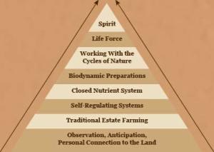 bio pyramid