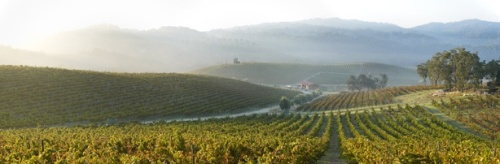 Tablas Creek Vineyards, Paso Robles (winery website)